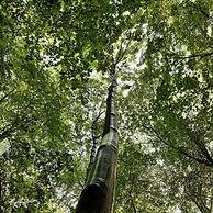 """""""Partez à la découverte des arbres de nos contrées urbaines et des formes de vie qui en dépendent. Il vous sera donné de comprendre, observer, décrire, interpréter, ressentir et exprimer la particularité de ces êtres sensibles, fondateurs de vies heureuses et génératrices.""""  C'est tout un programme et une véritable balade sensorielle pour poser un autre regard sur le monde végétal."""