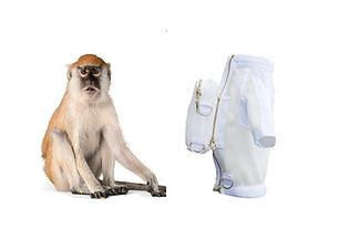 cynomolgus_monkey.jpg