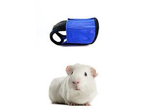 Guinea pig jacket
