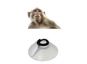 Monkey elizabethan collar
