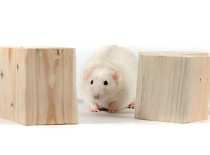 Rodent chewing blocks