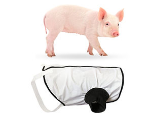 Mini pig undershirt