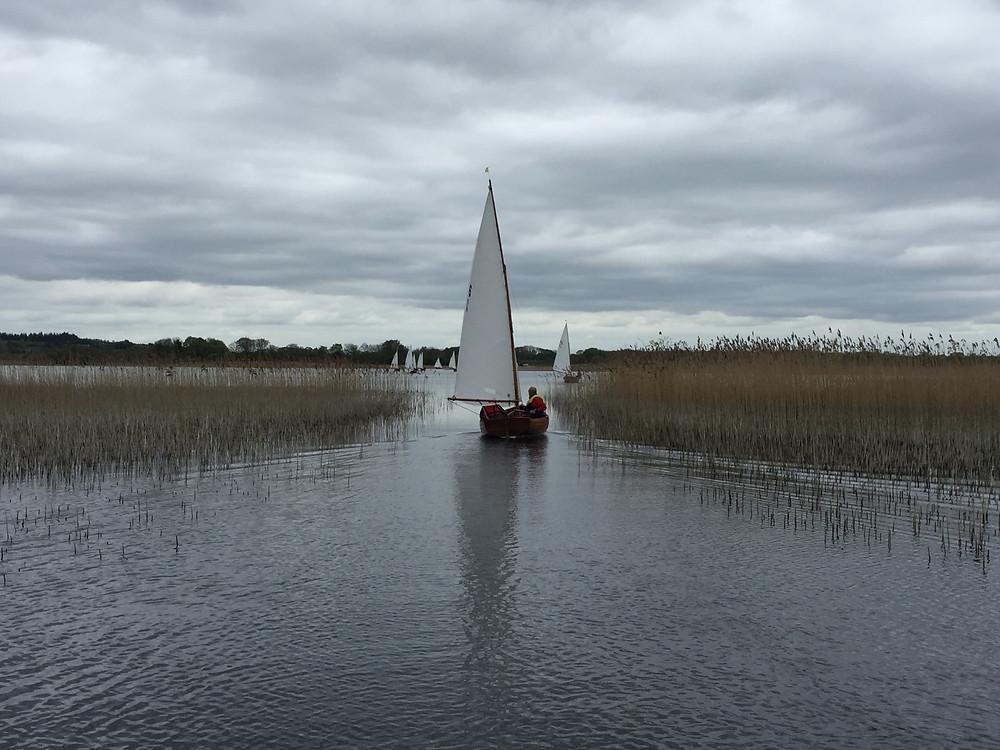 Water Wags Ireland