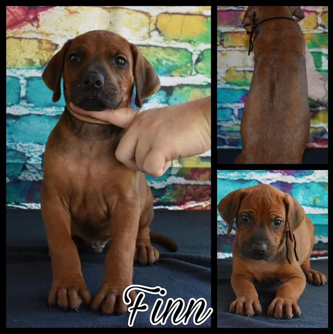 Finn RR F 5 wks.jpg