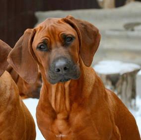 Diona puppy_website.jpg