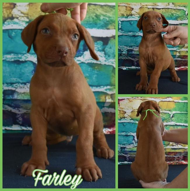 Farley RR F 5 wks.jpg