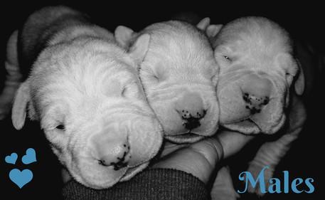 Dogo boys_website.jpg