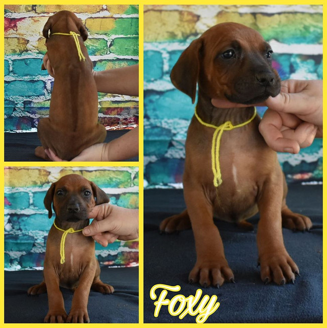 Foxy RR F 5 wks.jpg