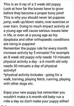 Hip Dysplasia post.jpg