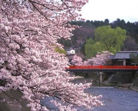 中橋と桜2.jpg