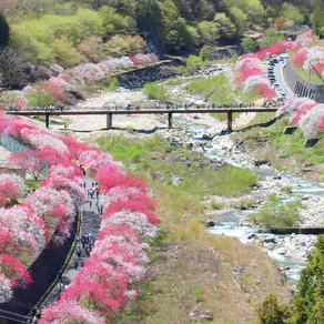 Hanamomo no Sato, Achi Village, Nagano