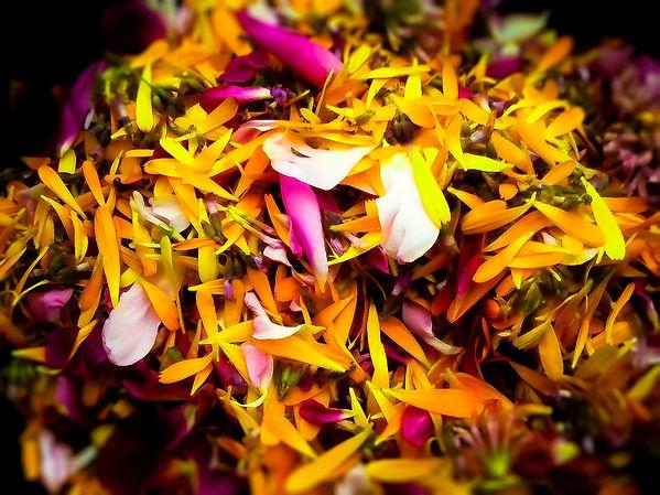 KJF-calendula-roses.jpg