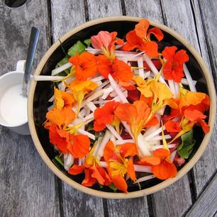 Nasturtium salad.JPG