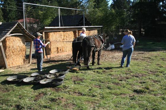 Ponies at work