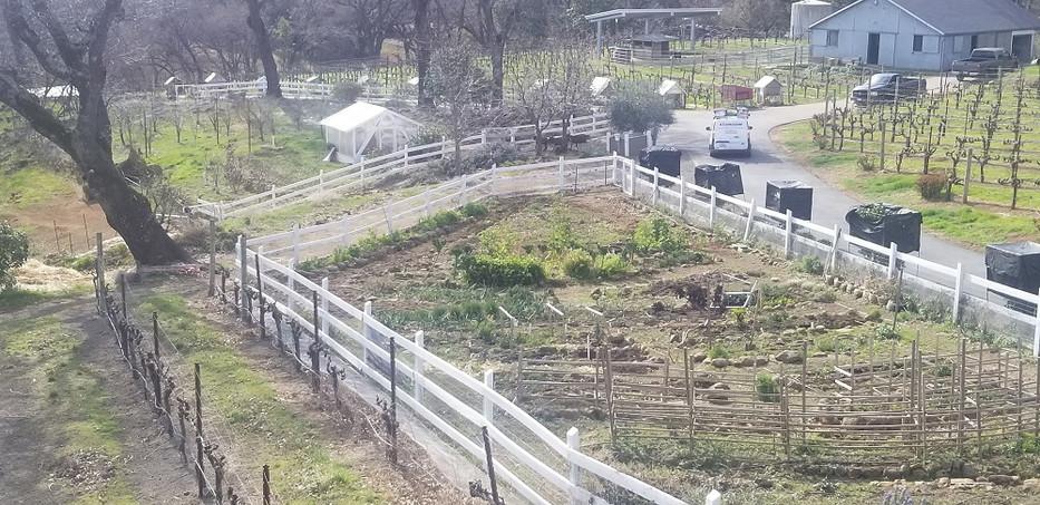 Amuse Bouche vineyard and farm.jpg