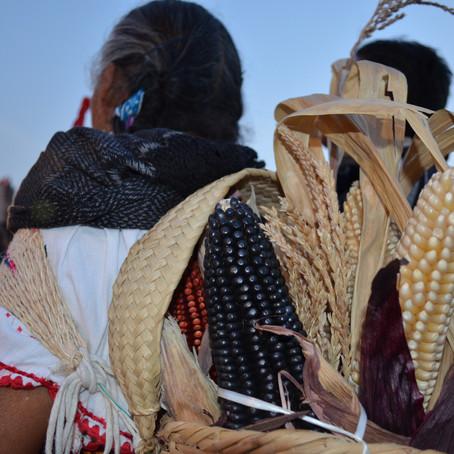 Derecho Agrario: Género, igualdad y, órganos de representación ejidal y comunal.