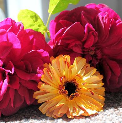 calendula-rose.jpg