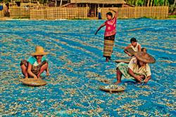 Drying Fish, Ngapali Beach, Myanmar 2008