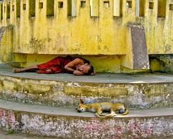 Sleeping Monk and Dog, Twante, near Yangon 2007