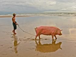 Man Walking His Pig, Ngwe Saung Beach, Myanmar 2007