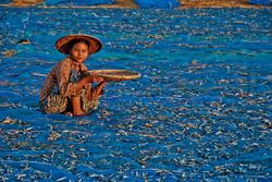 Young Woman Drying Fish, Ngapali Beach, Myanmar 2009