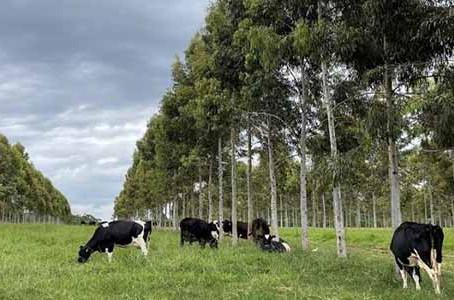 Parceria entre Embrapa e Nestlé para pecuária de leite de baixo carbono
