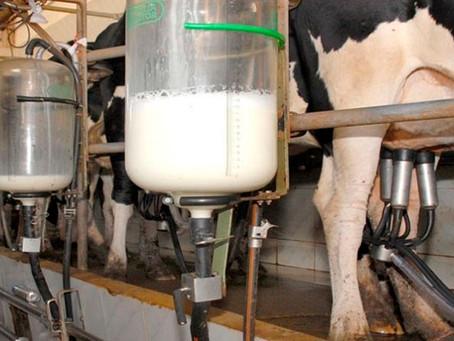 Custo de produção do leite subiu 2,89% em maio, segundo Embrapa
