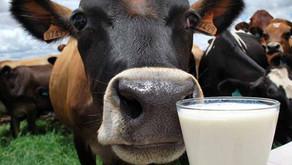 Produtividade da pecuária leiteira cresce mesmo com pandemia