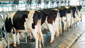 Produtividade média por vaca registra expansão de 64% em uma década