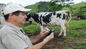 Altas do preço do leite e dos custos de produção exigem cautela do produtor