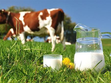 Preço do leite ao produtor sobe 8% e atinge recorde para o mês de junho