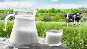Embrapa aponta ligeira melhora no cenário do setor leiteiro