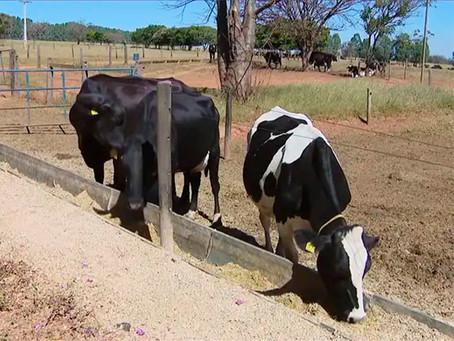 Crise entre produtores de laticínios de Minas Gerais ameaça setor leiteiro