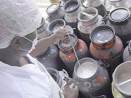 Preço do leite em Minas fecha ano com valorização de 55,14%