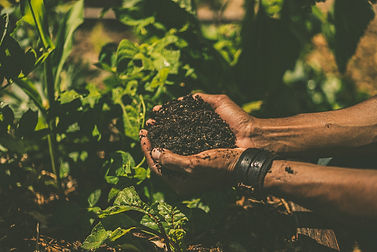 Hands with Soil 1.jpeg
