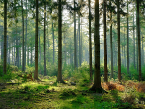 What Is Ecosystem Management?