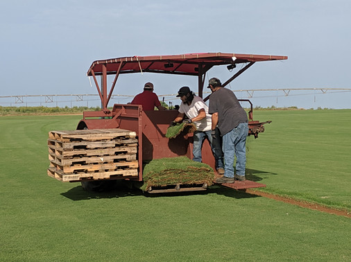 Red Dirt Turf First Pallet for Final Tractor Adjustments