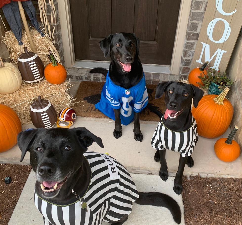 Senior Canine in Costume