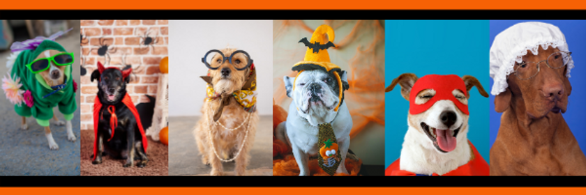 Senior Canines in Halloween Costumes