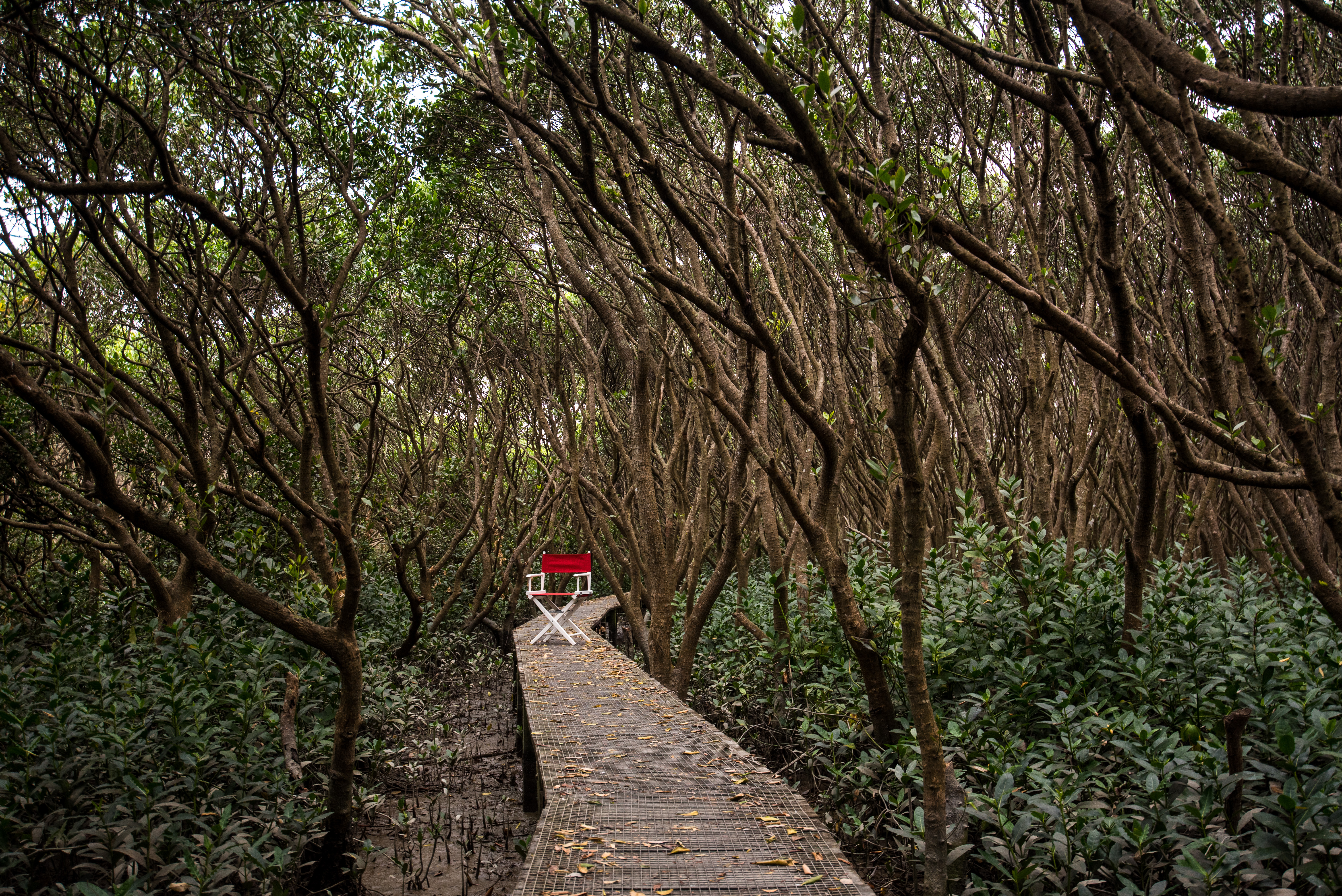 Mai Po Mangroves