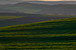 Farmlands of Ankara