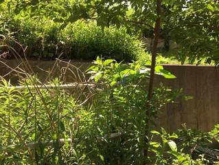 我孫子市|草刈・ジャングル|実例