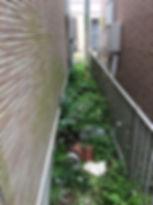 家の周りにある狭い通路の雑草