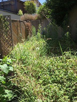 庭の草が伸びてしまったジャングル状態