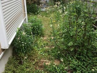 草刈り・解体|実例