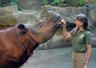 The Plight of the Sumatran Rhino: A Conversation with Terri Roth, Vice President of Conservation and