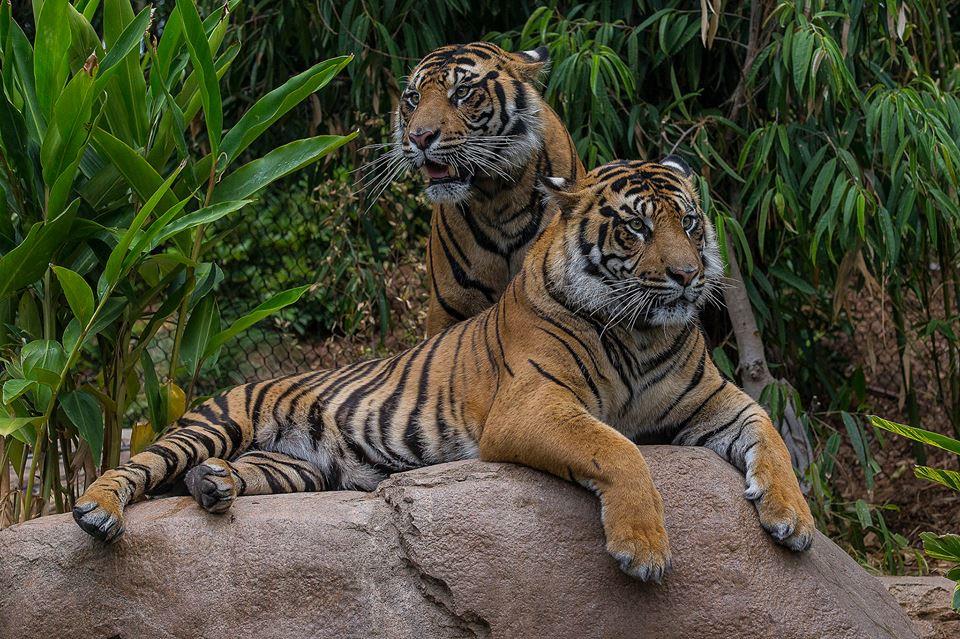 @ San Diego Zoo Globl
