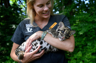 A Conversation with Dr. Heather Robertson, Director of Veterinary Service at the Nashville Zoo