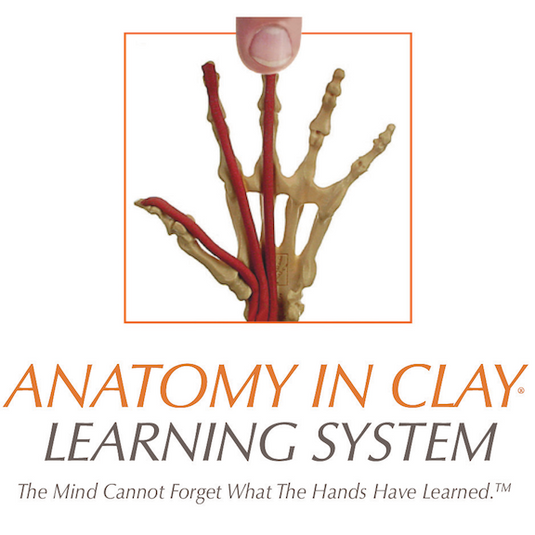 Anatomy in Clay_Logo.png
