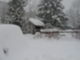 Winter interest 001.jpg